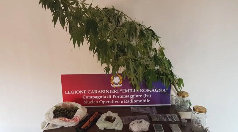 marijuana droga