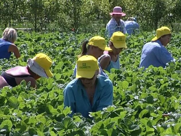 Come incide il clima anomalo sull'agricoltura