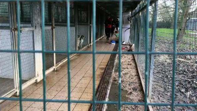 A Ferrara riaperti al pubblico da oggi canile e gattile comunali