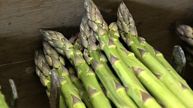 L'asparago verde di Altedo Igp, una risorsa per il territorio – VIDEO