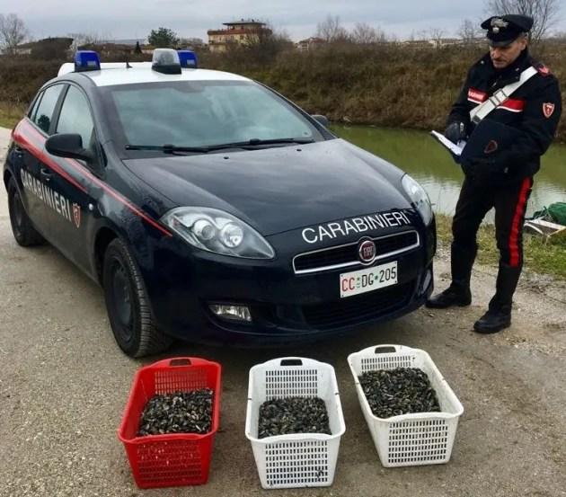 Ladri di vongole sorpresi dai carabinieri
