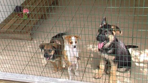 Tari cancellata per chi adotta un cane dal canile. La proposta elettorale del PD