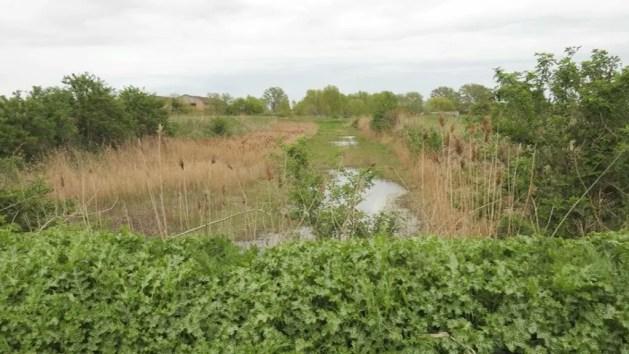 Ex zuccherificio di Comacchio, una zona umida al posto dei fanghi: il progetto – VIDEO