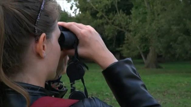 Una Scuola di birdwatching internazionale – VIDEO