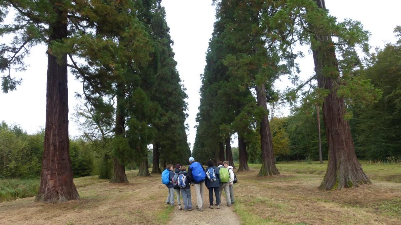 Allée des Sequoias