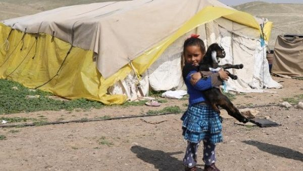 A Bedouin Palestinian girl carries a goat outside her family