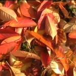 Baka színei az őszi napsütésben