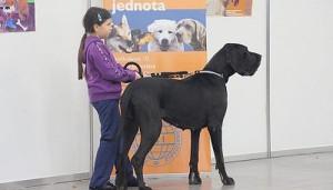 Kutyakiállítás Pozsonyban 2011