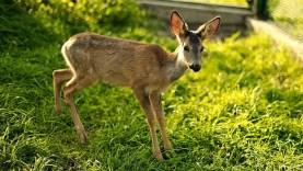 Nyár vége az állatmentőknél Zázriván