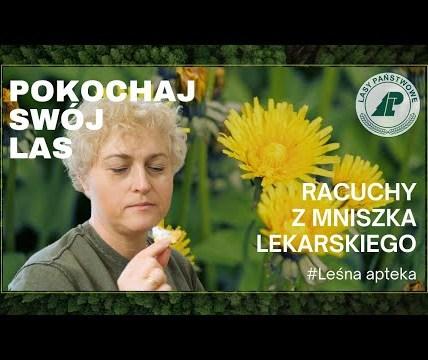 Jak zrobić racuchy z mniszka lekarskiego? #Leśna apteka. Pokochaj swój las #5