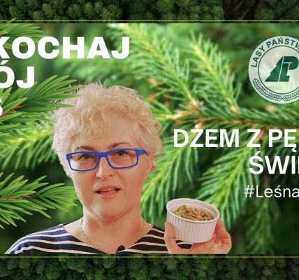 Jak zrobić dżem z pędów świerka? #Leśna apteka. Pokochaj swój las #4