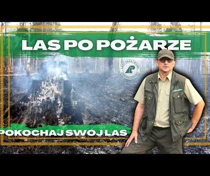 JAK PŁONIE LAS? 99 na 100 POŻARÓW w lesie PRZYCZYNĄ jest człowiek. Akcja gaszenia w leśnictwie.