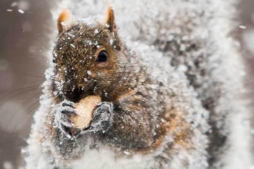 Frozen Nut