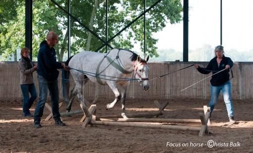 25 t/m 27 september 2020 TTouch voor Paarden