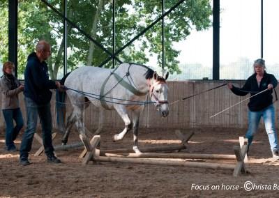 7 t/m 11 september 2017                 TTouch voor Paarden