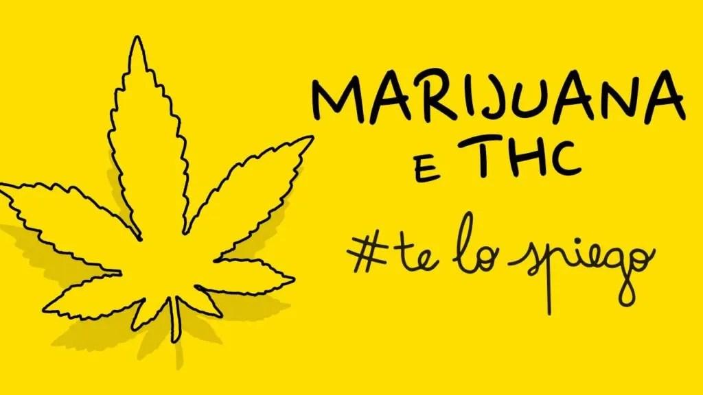 COME FUNZIONA LA MARIJUANA? #TELOSPIEGO!