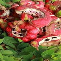 chimachinta kayalu (3)