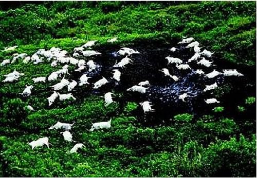 Bestiar mort al llac Nyos