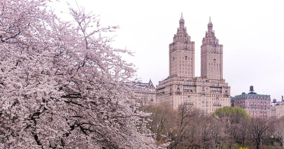เที่ยวนิวยอร์ก New York - Roosevelt Island -Cherry-Blossom New York ซากุระ