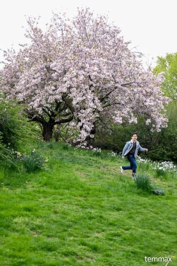 รีวิว เที่ยวนิวยอร์ค New York Botanical Garden Cherry Blossom เดือนเมษายน สวนพฤกษศาสตร์ Bronx