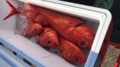 深海も釣れる棚を見つける&聞く👂🎣