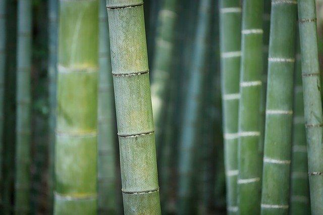 ¿Qué tipo de cultivador de bambú eres? Éxito laboral