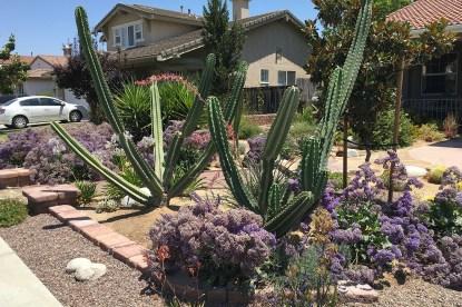 Arid garden 4