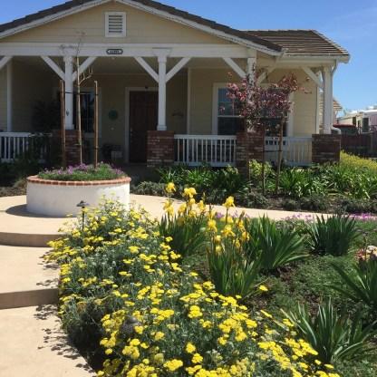 Cottage garden 2