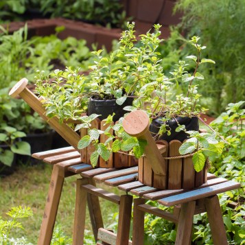 Watering cans with herbs