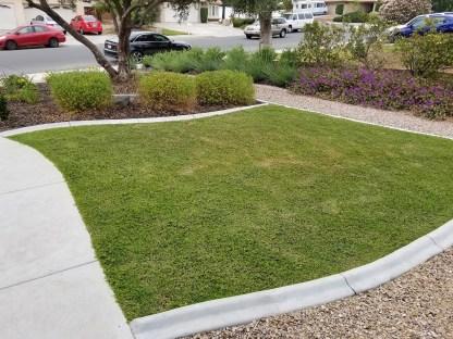 Kurapia ground cover