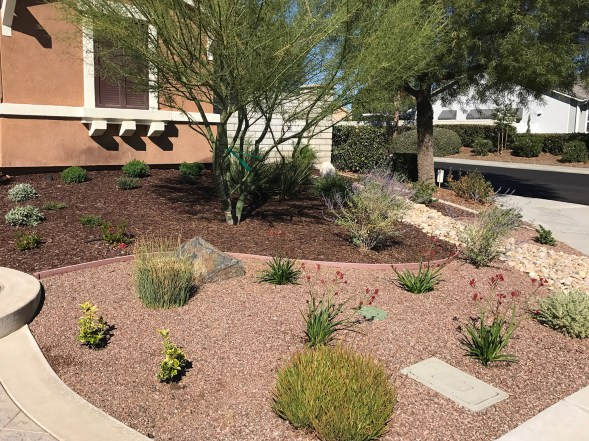 Front yard landscape with Palo Verde Tree