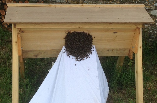 A swarm of bee going into a top bar hive