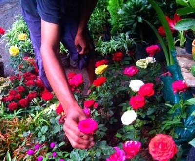 Bunga Jalan Kayoon Surabaya