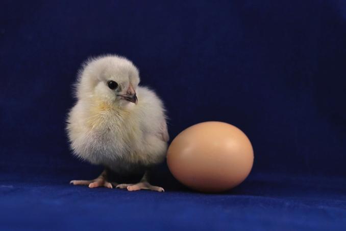 Meglio un uovo oggi che un bambino domani