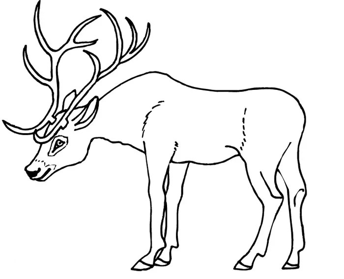 deer template  animal templates