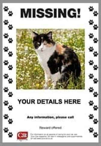 21 free missing cat poster template word excel formats