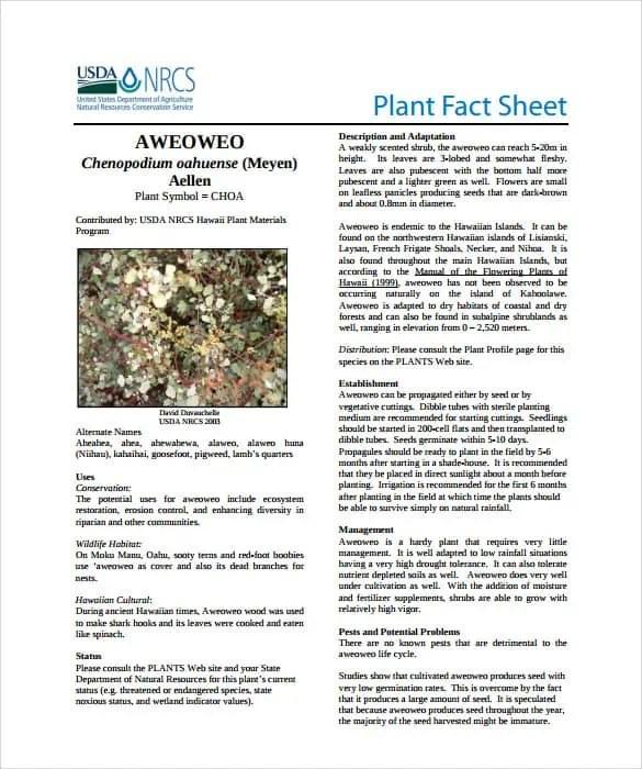 High Quality Fact Sheet Template 20 ...