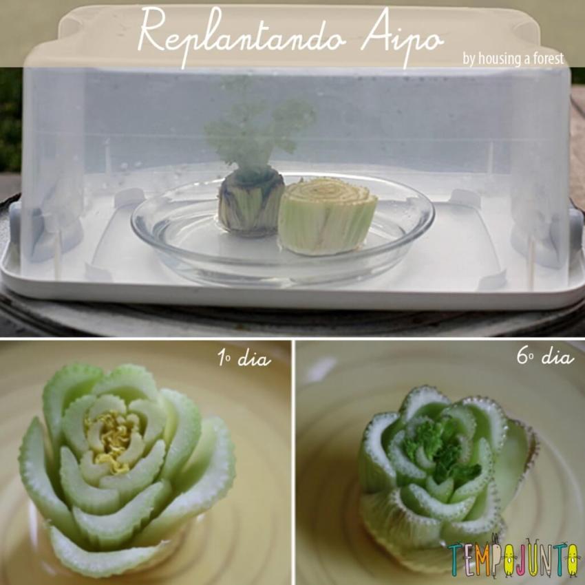replantando_Aipo