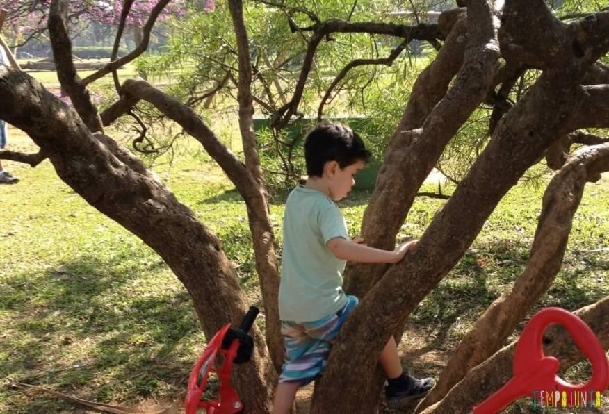 Criança agitada - Subindo em árvore