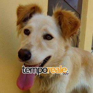 Camilla, uno dei cani in cerca di famiglia