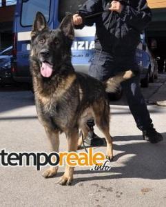 Il cane anti droga Iago