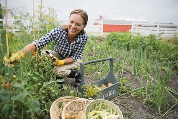 Gardening & Fruit Farming