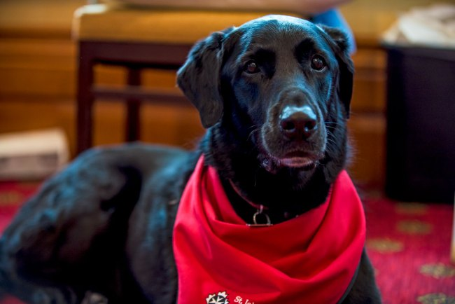 CARE4YOU-Halifax2018-therapydog2