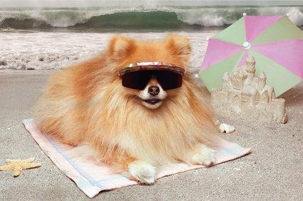 Fliegen mit Hund nach Teneriffa