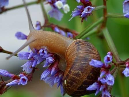 Múltiples propiedades en la baba de caracol