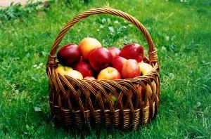 La niña de las manzanas