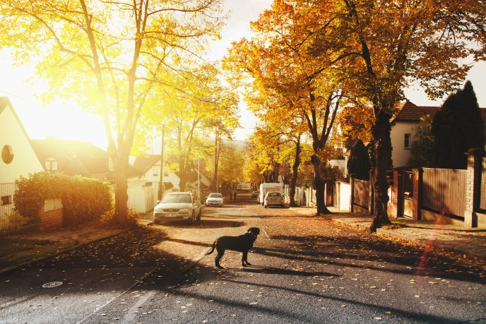 Photo of a black dog standing in the middle of the road as the sun rises