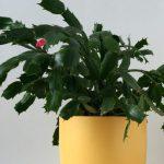 Ar Tu esi tas žmogus, kurio namuose neauga gėlės? 6 kambarinės gėlės, kurias lengva auginti.