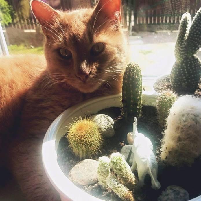 katinas-sukulentai
