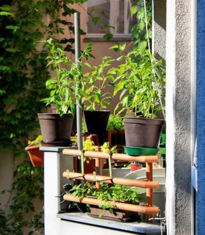 ką auginti balkone